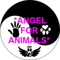 Angel for Animals